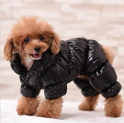 Waterproof Pet Dog Clothes Coat For Small Dog Winter Puppy Jacket Warm Clothing Pet Products D65 ...