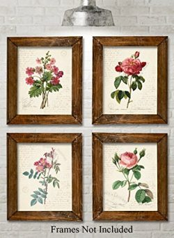 Paris Botanicals Art Prints – Set of Four Photos (8×10) Unframed – Great for Be ...